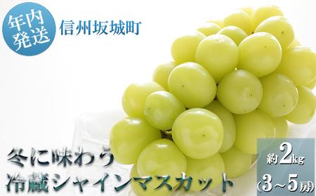 冬に味わう!冷蔵貯蔵シャインマスカット約2kg (3~5房)