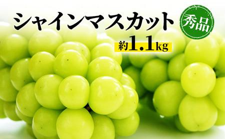 柳澤果樹園 訳ありシャインマスカット約1.1kg(粒・房混合)