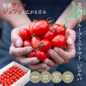 高濃度フルーツトマト【ジェルバ】 1.2㎏ 2021年産受付開始!