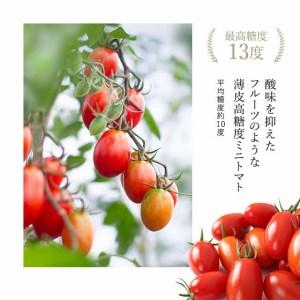 高濃度フルーツトマト【ジェルバ】 1.2㎏