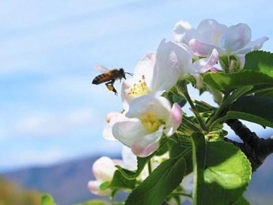 [0390]やまり園のりんごジュース 1000mL×6本 長野県飯綱町産 サンふじ果汁100%