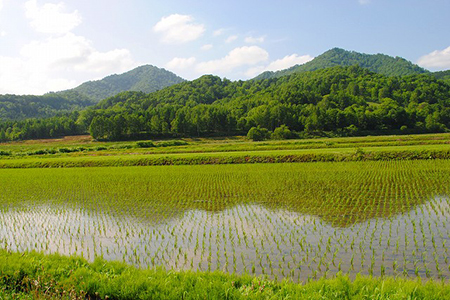 【A11201】愛別町産米(ななつぼし5kg×2袋)