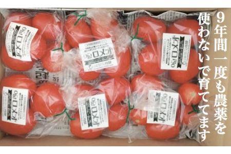 [8月限定]クッキングトマト(調理用)「Oh!ロメオ」1.8kg[飛騨高山産] a505