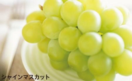 20S381ベルメゾンカタログギフト MUSUBI (千歳緑 ちとせみどり)