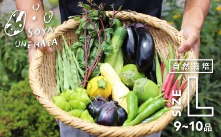 野菜セット 10~12品 自然栽培 野菜BOX・Lサイズ[B0231]
