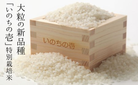 定期便 クオリティ飛騨 新米 いのちの壱 10kg×12ヶ月 令和2年産 玄米対応可能 [M0004]