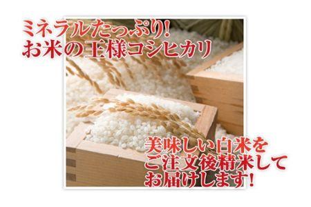 【2600-0414】特別栽培米 コシヒカリ 精米5kg