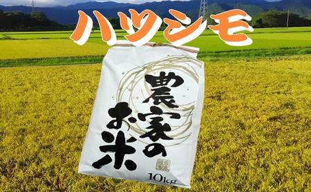 池田町農家 令和2年産特別栽培米ハツシモ 10kg 白米/玄米