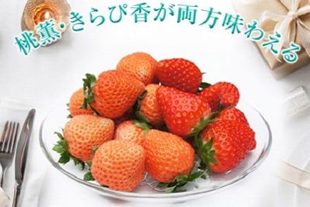 a12-038 いちご「桃薫・きらぴ香」食べ比べセット計4パック