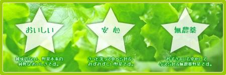柿田川野菜 3種のレタス詰合せ(フリルアイス5袋・ビバグリーン5袋・フレアベルディ5袋)