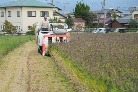 わたなべ農園直送のお米と季節の野菜セット
