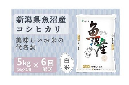 <安心安全なヤマトライス>新潟県魚沼産コシヒカリ 5kg  ※定期便6回 下旬発送 H074-168