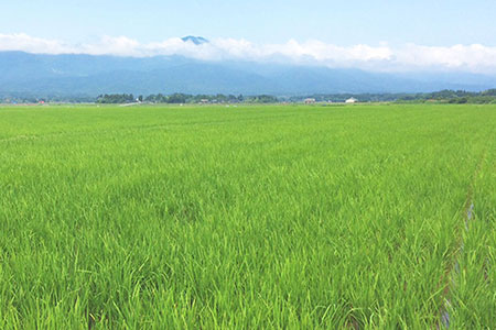 新潟県産コシヒカリ 無洗米 5kg ※定期便12回 下旬発送 安心安全なヤマトライス H074-173