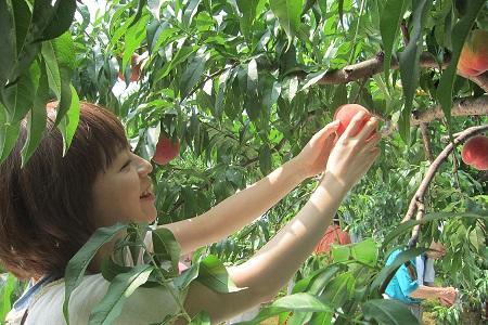 6月~12月まで楽しめる果物狩り