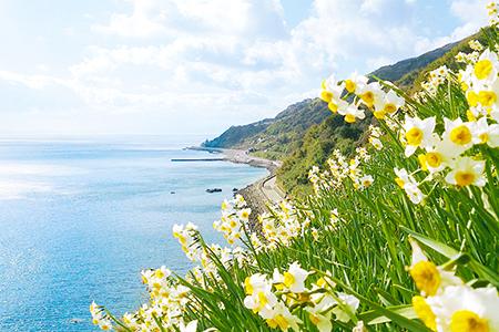 灘黒岩(なだくろいわ)水仙郷と沼島(ぬしま)