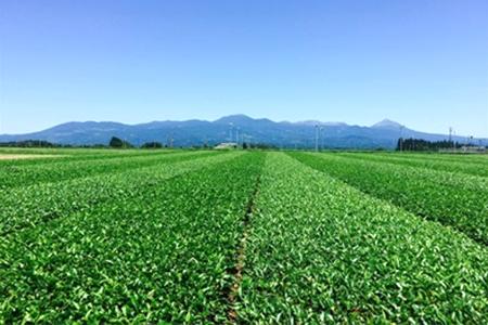 大自然の中に広がる茶畑